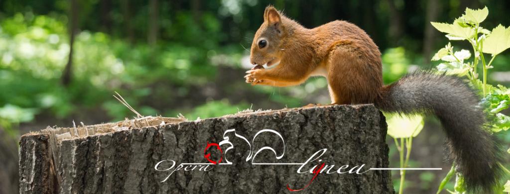 scoiattolo su tronco Opera Lignea