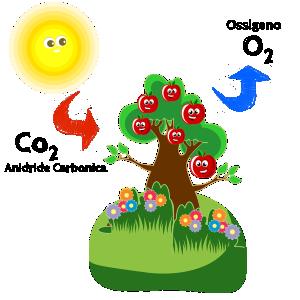 processo-fotosintesi-clorofilliana-
