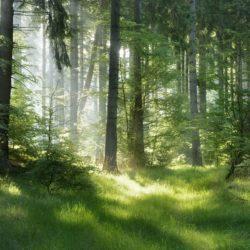 operalignea-bosco-ecosostenibile-toscana